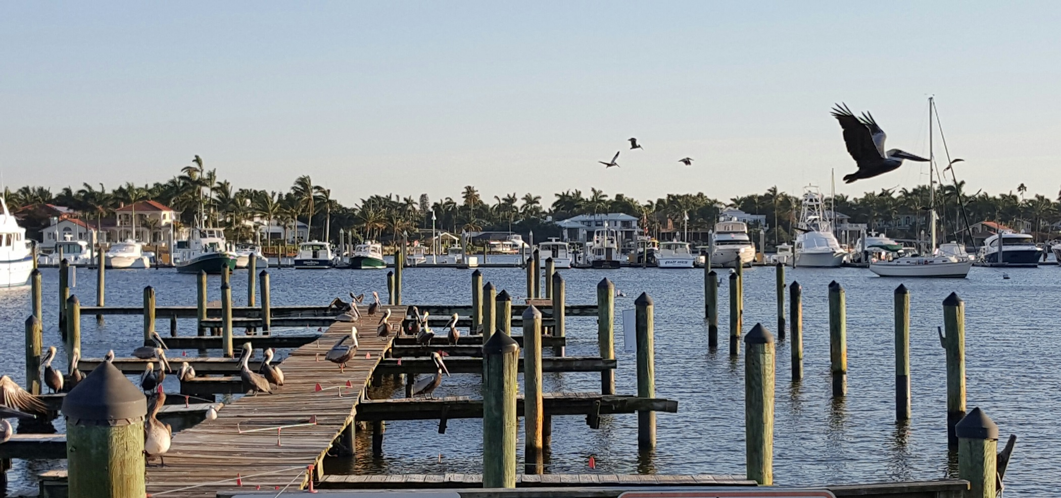Naples docks with birds